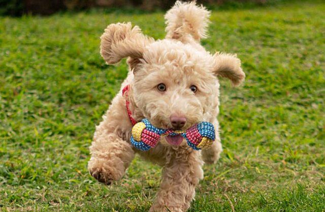 cane con gioco di corda
