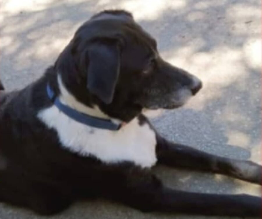 cucciola di cane con collare blu