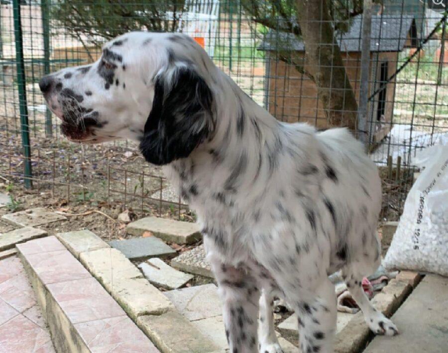 cane guarda di lato altura
