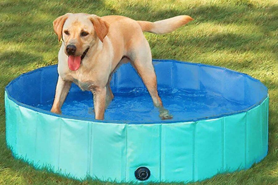 cane fa il bagno in piscina