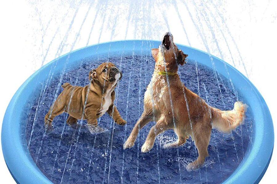 cani che giocano con l'acqua