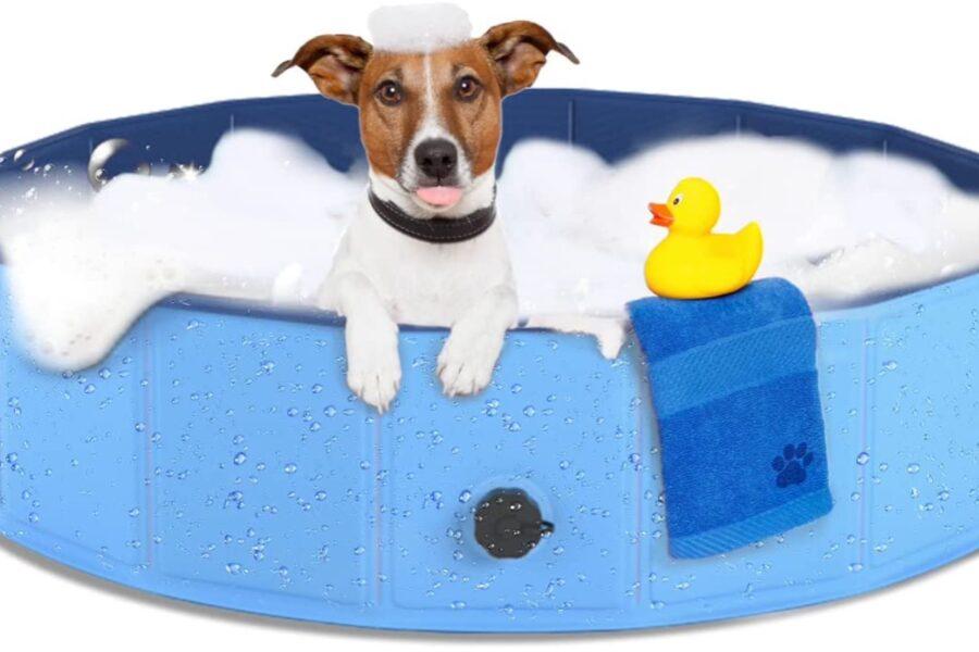 cane si lava in piscina