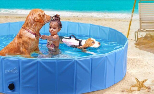 bambina e cane giocano in piscina
