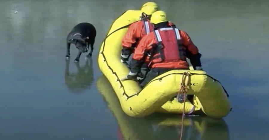 pompieri con gommone salvano cane nel ghiaccio