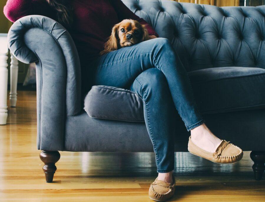 cane sulle gambe di una persona seduta sul divano