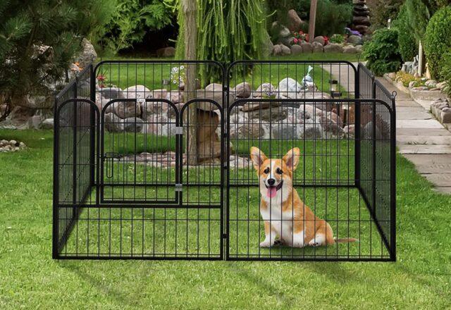 cane nel recinto del giardino