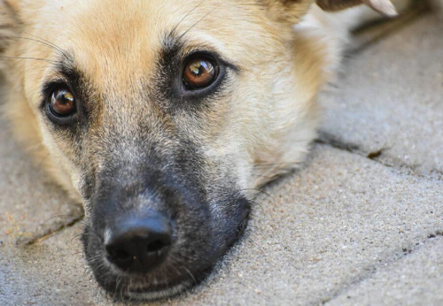 cane muso nero contrasto
