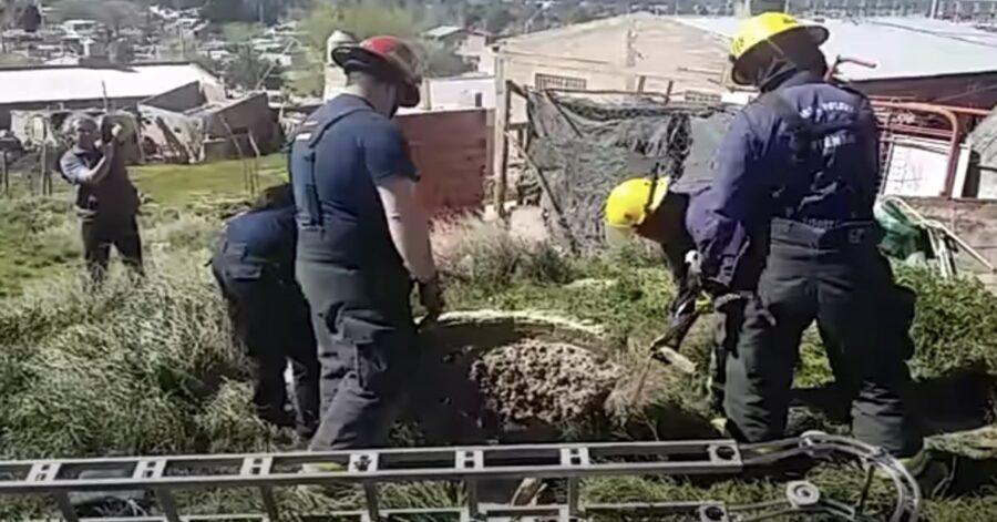 pompiere salvano un cane