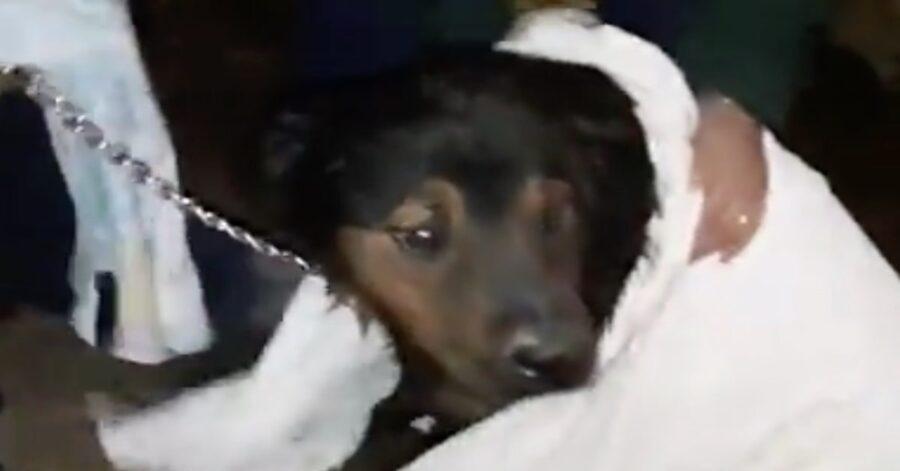 salvataggio cane intrappolato in un canale fognario