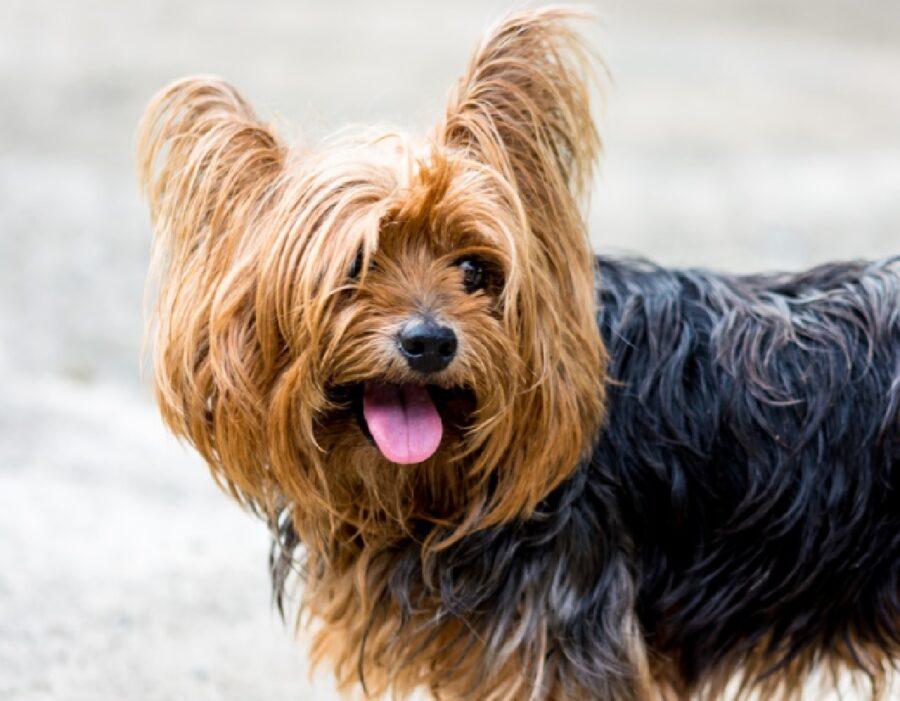 cane sorridente per strada