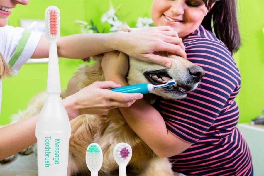 spazzolino elettrico per cani