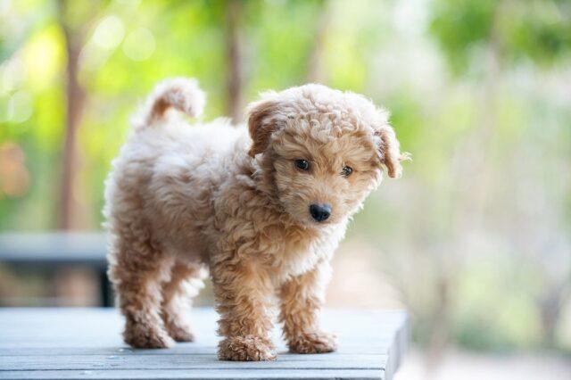 cucciolo di cane in piedi