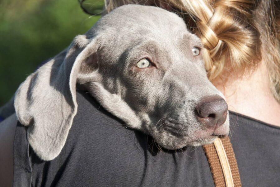 cucciolo in braccio alla padrona