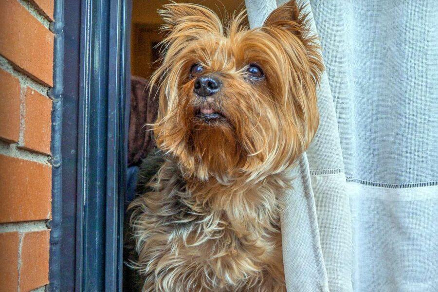 cane affacciato alla finestra