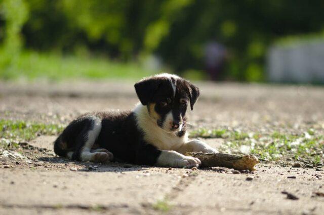 cucciolo dolcezza foto