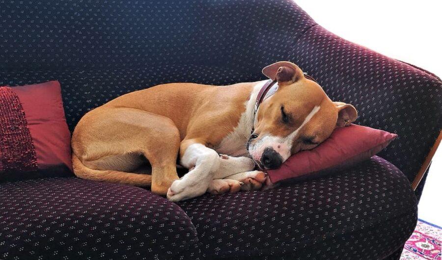 cucciolo riposo cuscino