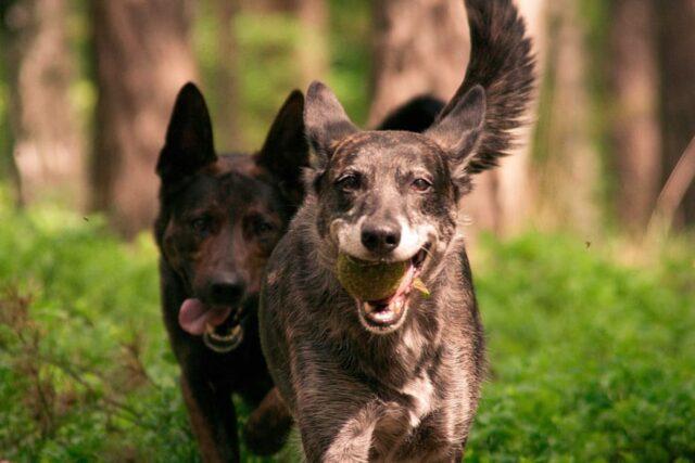 cani giocare insieme