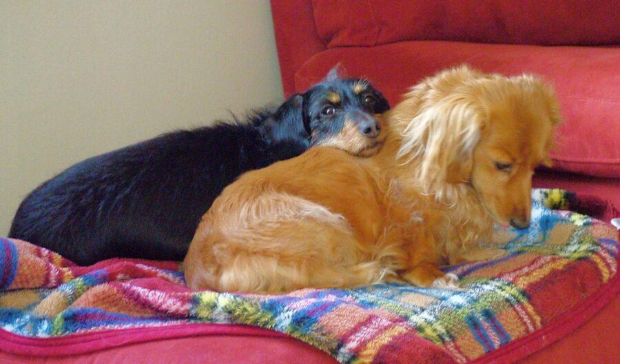cani dormono assieme