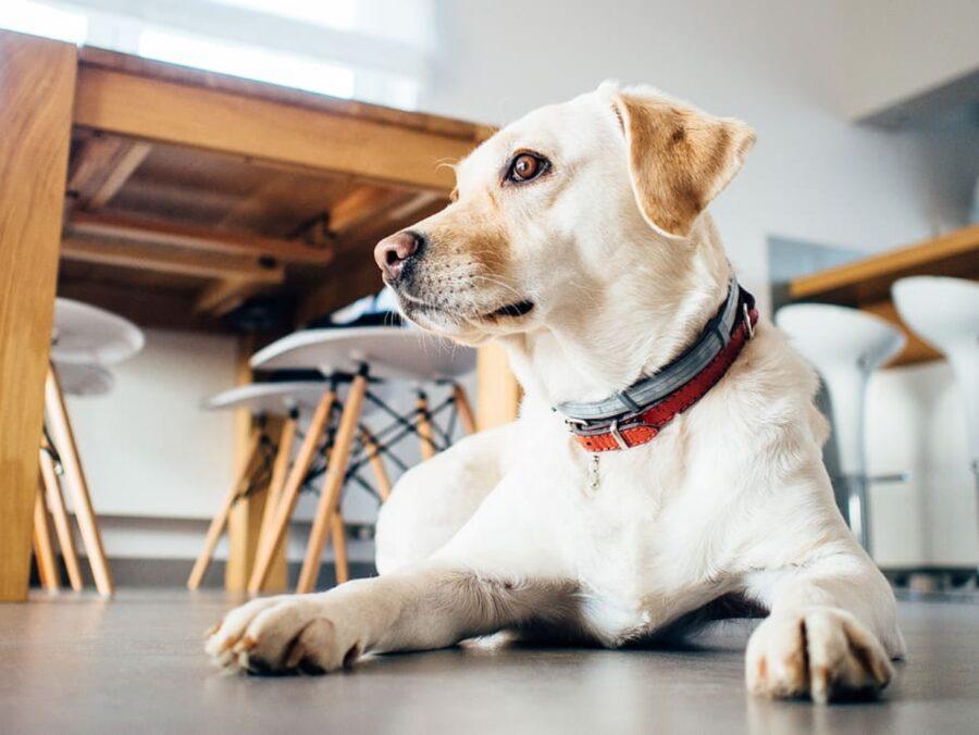 cane seduto cucina