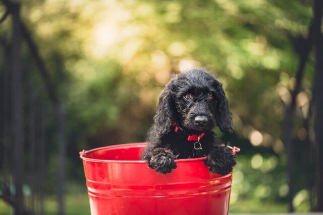 cucciolo nel secchio