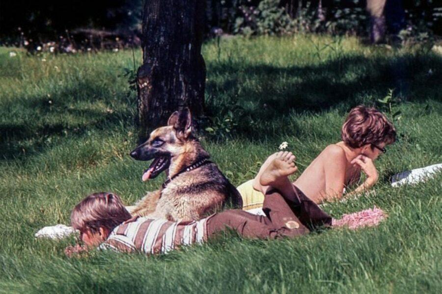 pastore tedesco amicizia