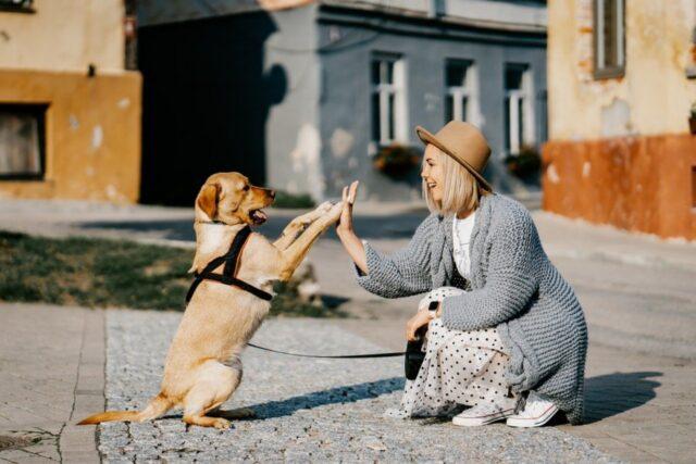 cane con mamma