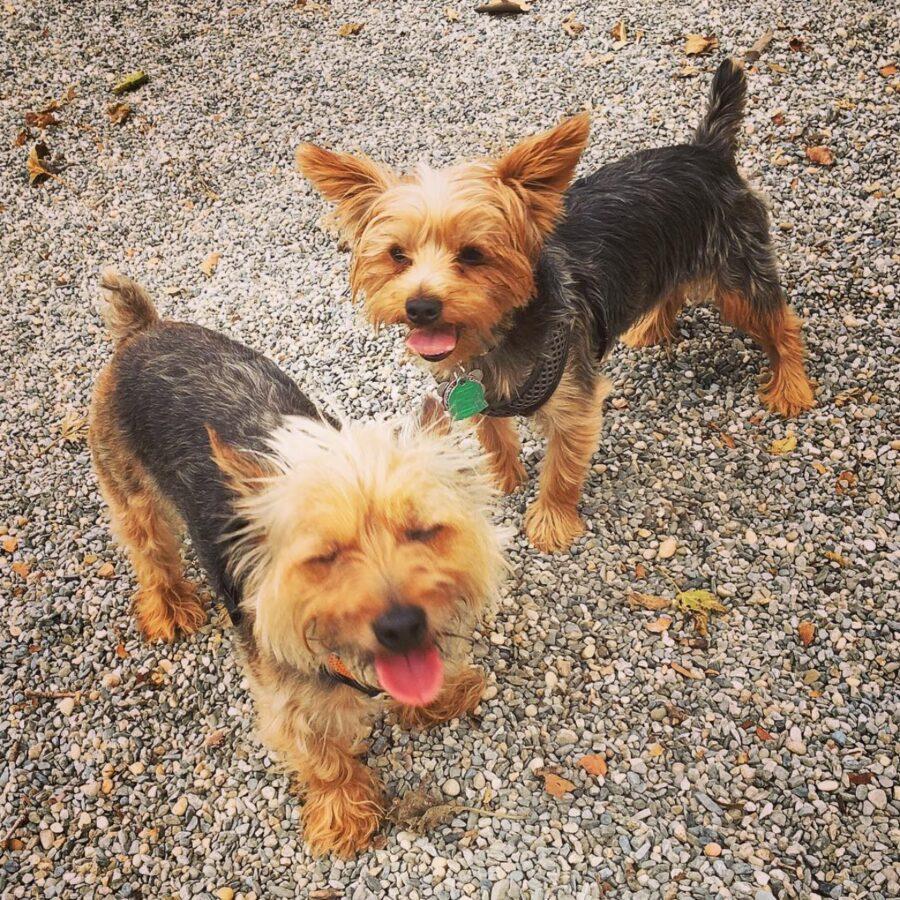 cani buffi coppia