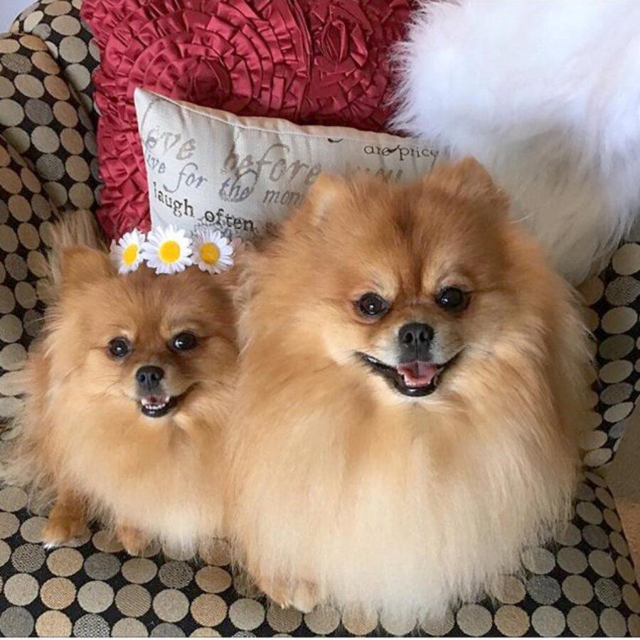 cani quasi uguali