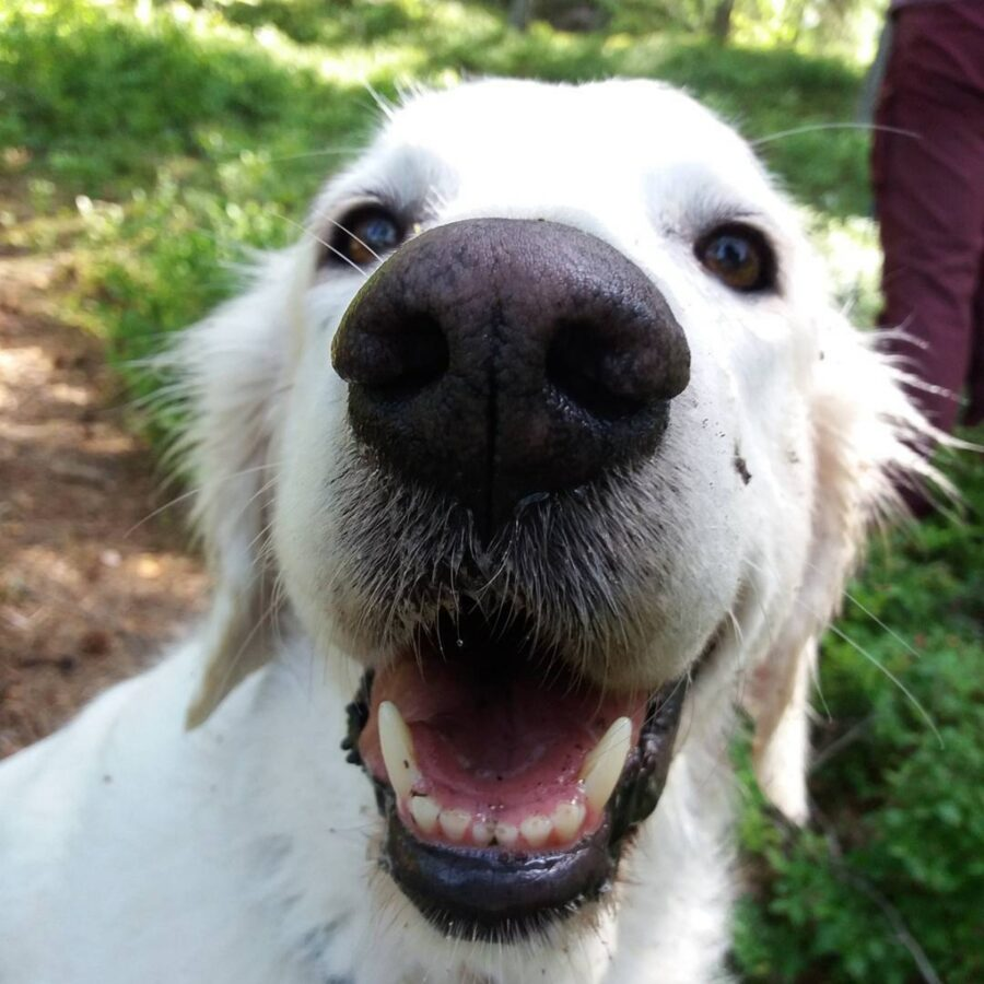 cane bianco gioco