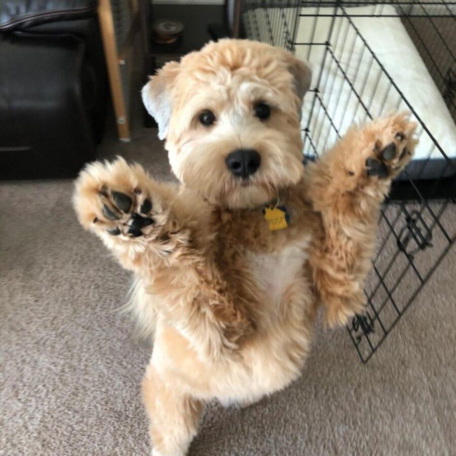 cane vuole coccole