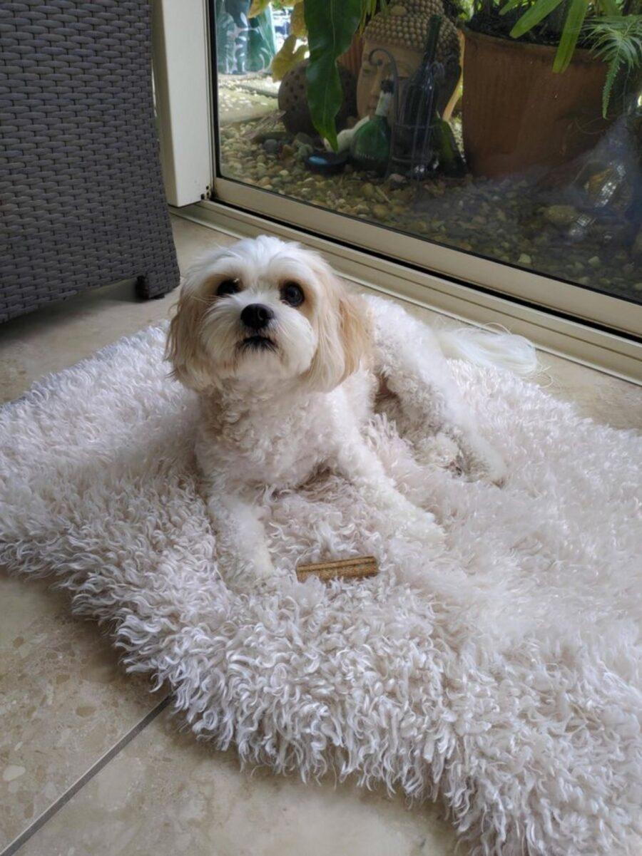 peloso tappeto bianco