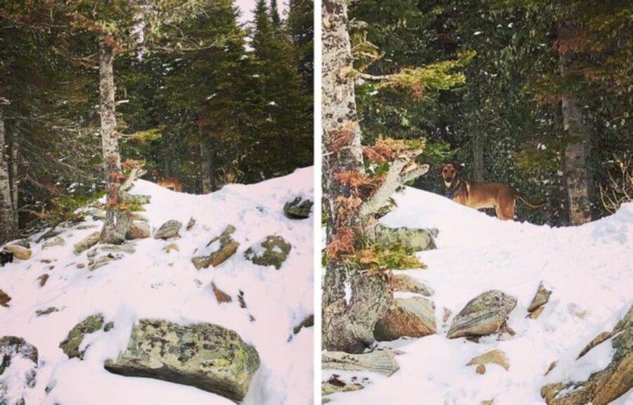 cucciolo neve confonde