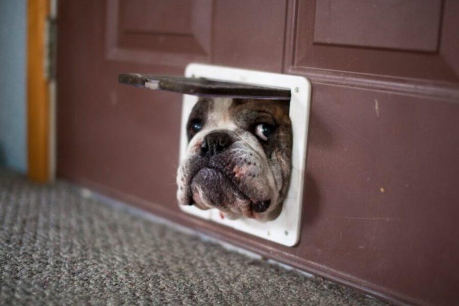 cane finestra affacciato
