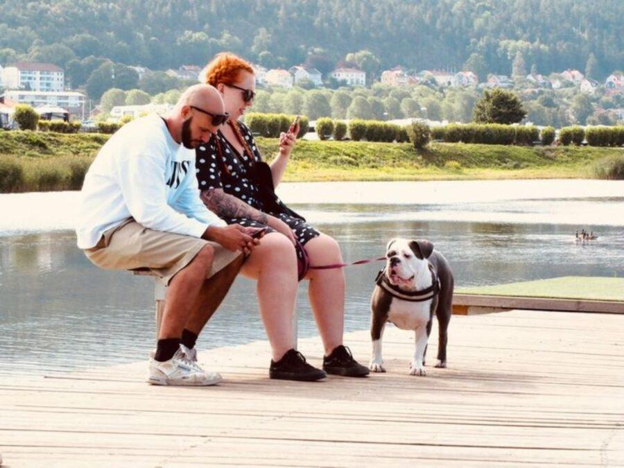 bulldog inglese parco