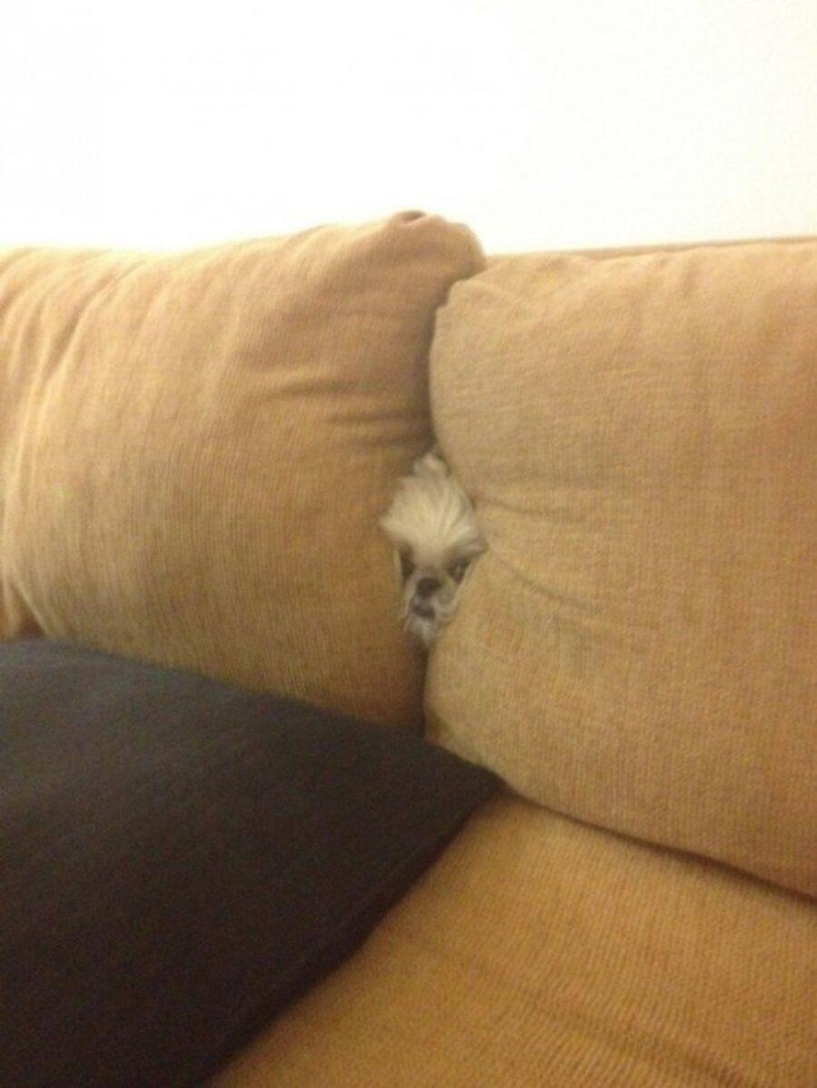 cane tra cuscini
