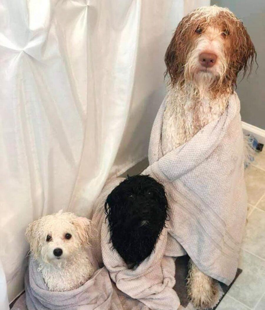 cani attesa asciugatura