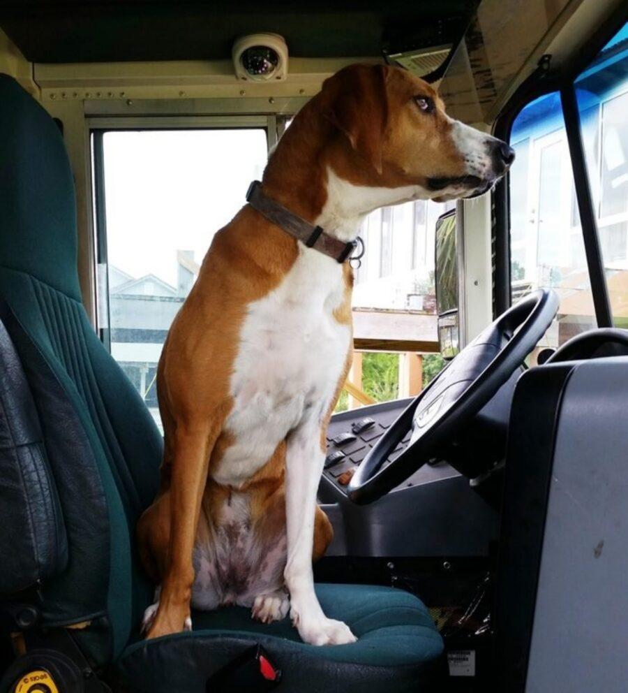 cane in autobus