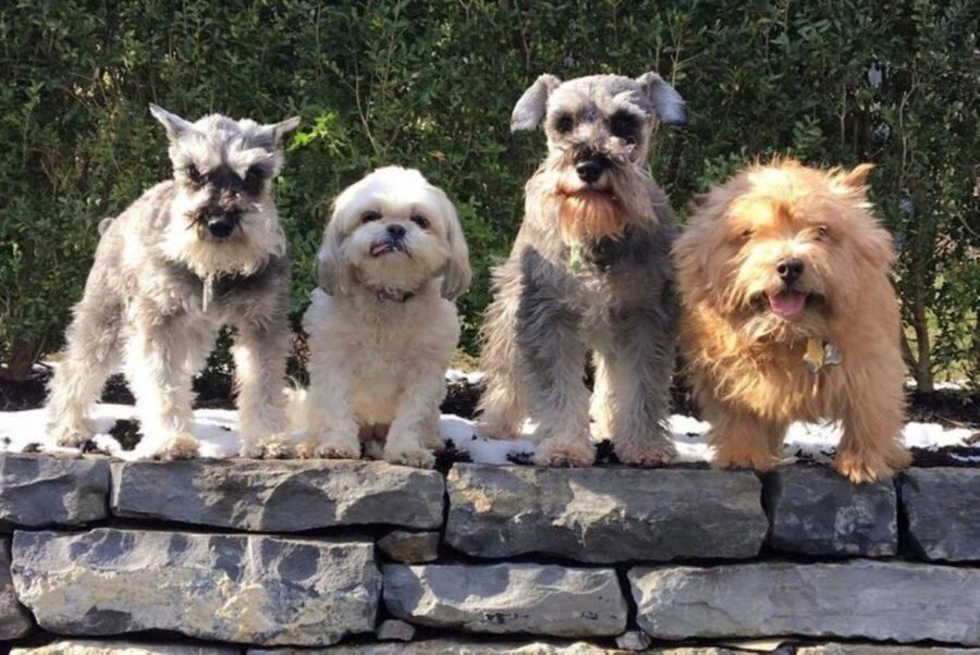gruppo cani dolci