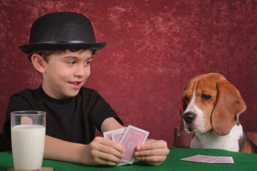 cane gioca carte