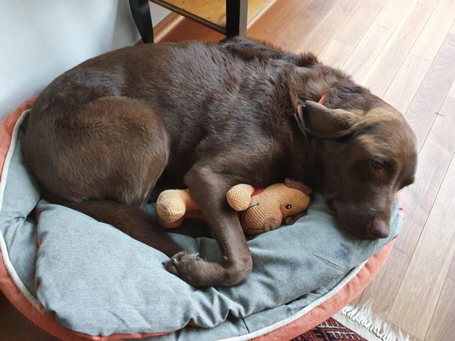 cucciolo dorme orsetto