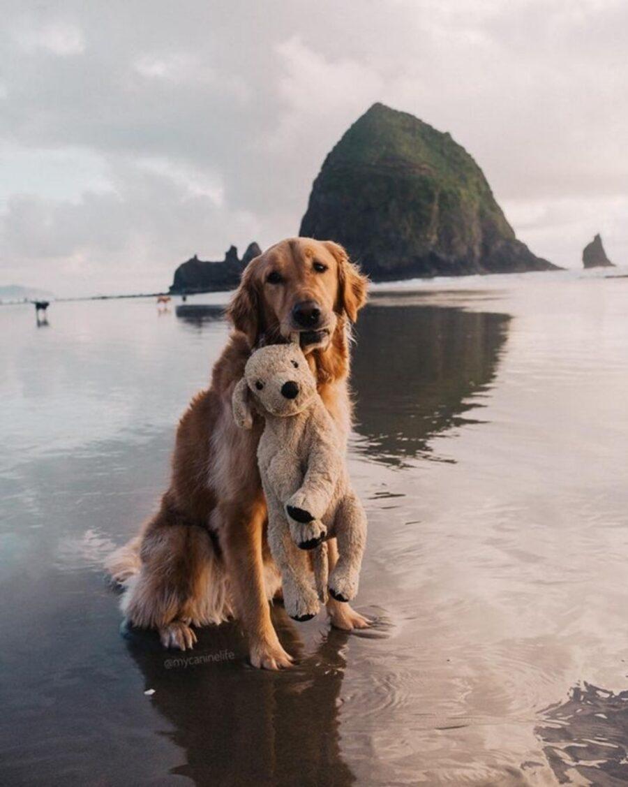 cane dolcissimo sguardo