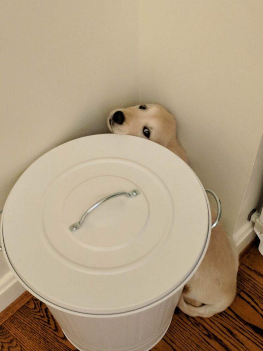 cane dietro secchio