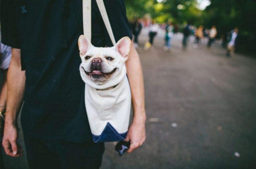 cane felice bulldog