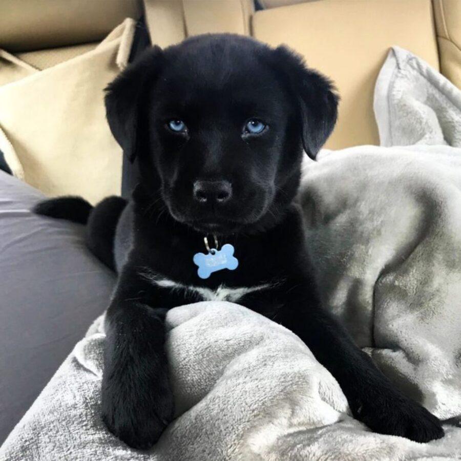 cane nero occhi