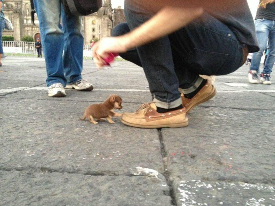 piccolo cagnolino scarpa