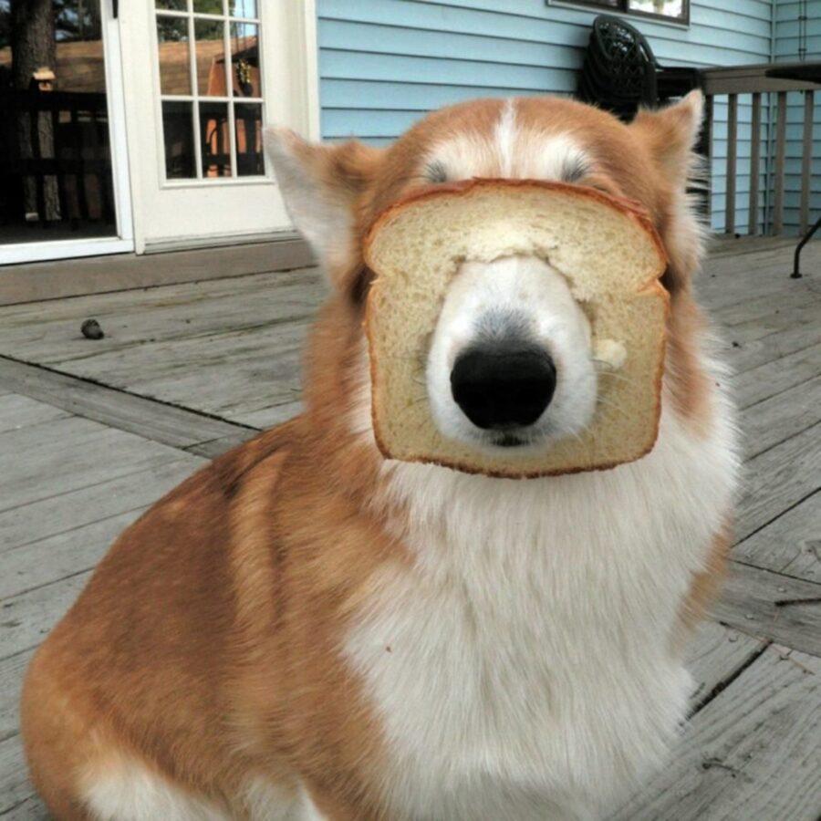 muso cane pane