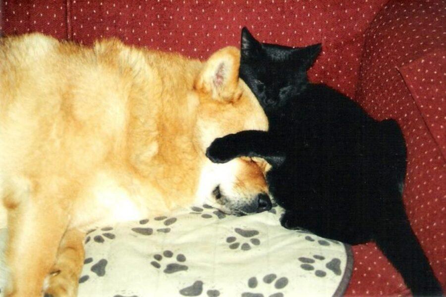 amici stupendi dormono