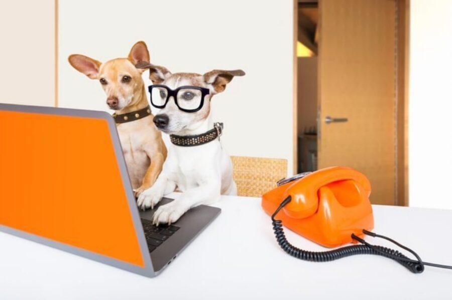 cani insieme lavoro