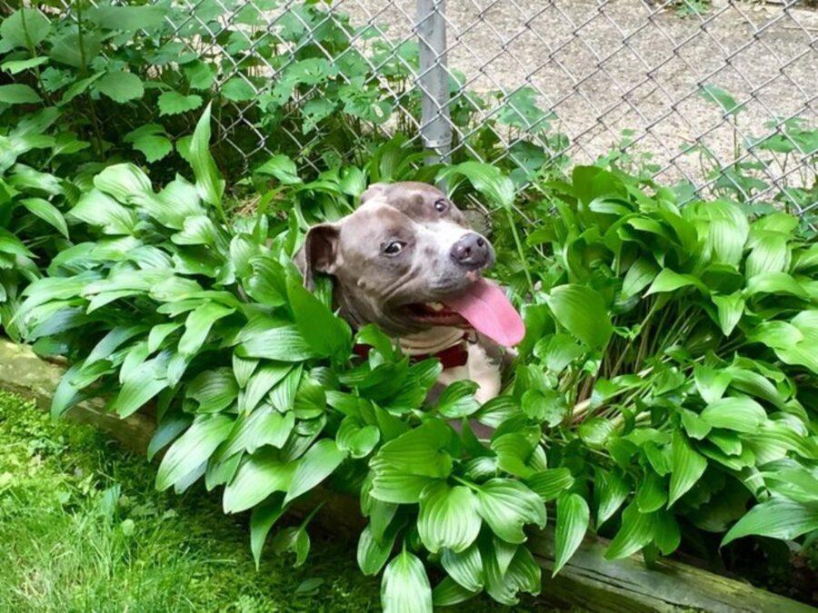 cane tra foglie