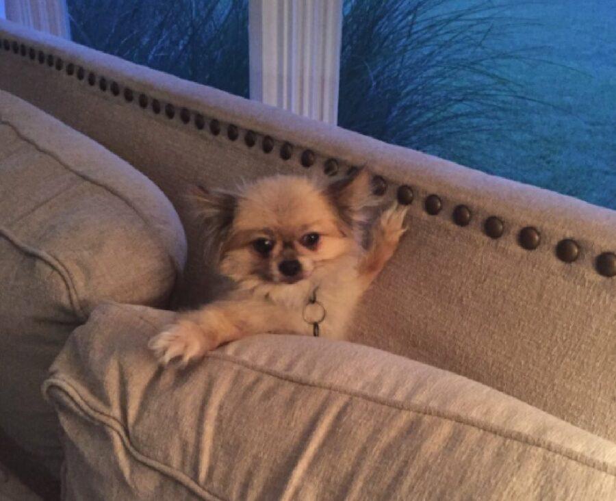 cane intrappolato divano
